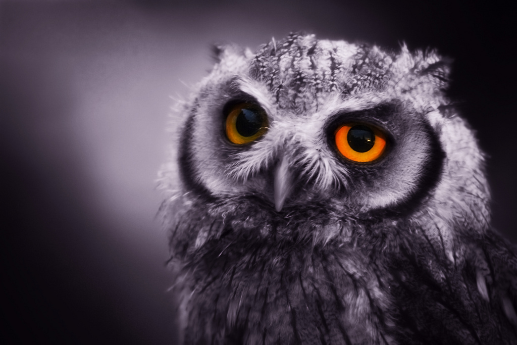 Consider the Night Owl: A Life Nocturnal